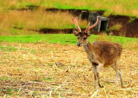 The Camsur Deer Farm