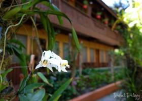 Princesa Michaella's Guesthouse | Port Barton, Palawan