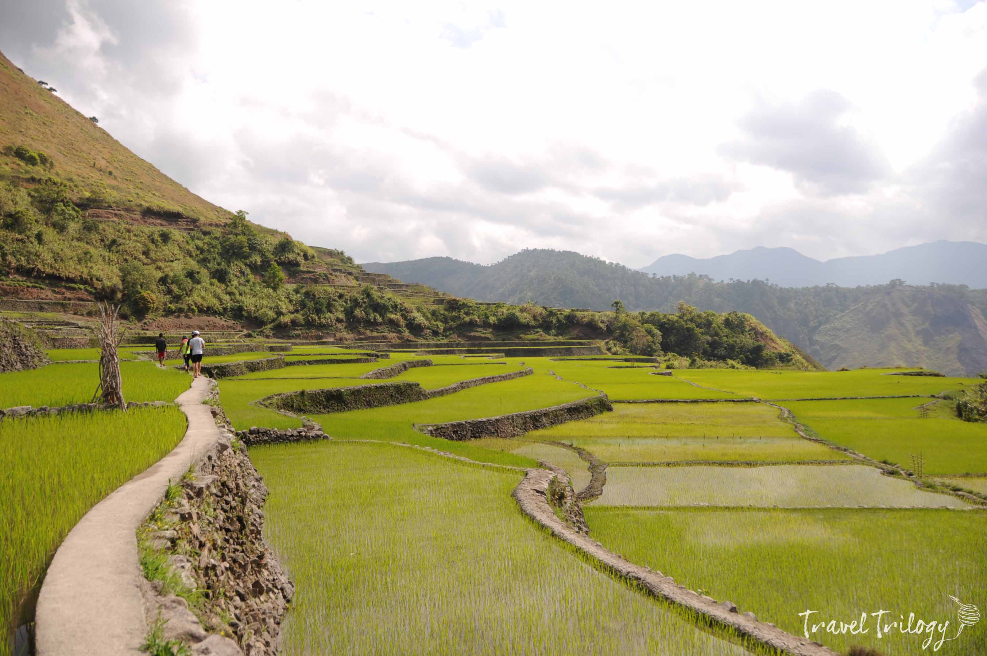 rice terraces kalinga