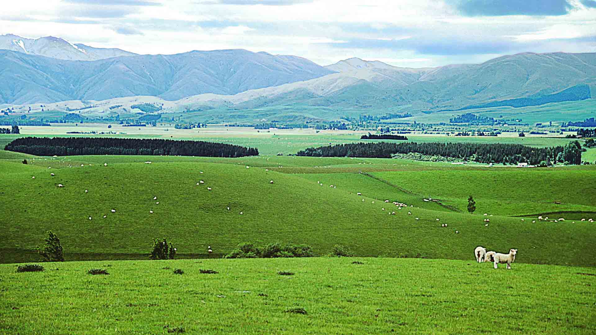 New Zealand's rolling hills. Photo credits: nz.mstecker.com