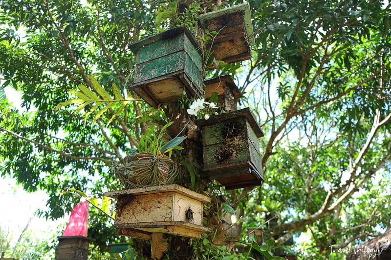 alabat bee farm