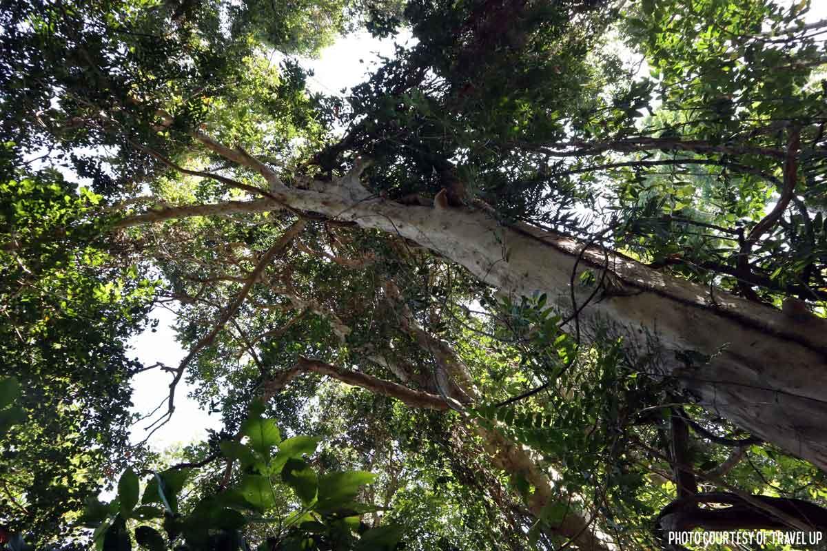 subic el kabayo trail